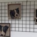Hondenkopjes vorstbestendig