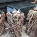 vogels expo beelden route vledder